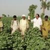 Staff visit to Pirowal Farm